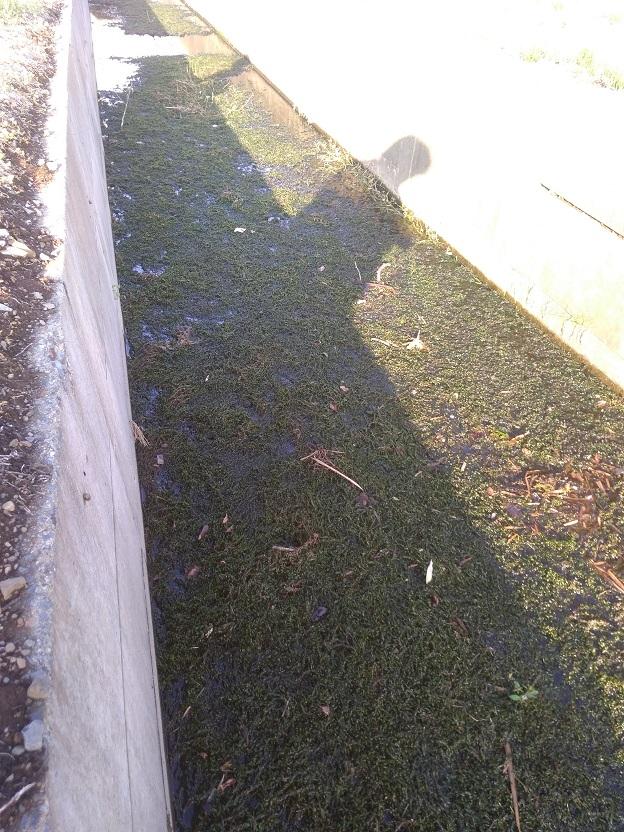 ミナミヌマエビが採取できる用水路