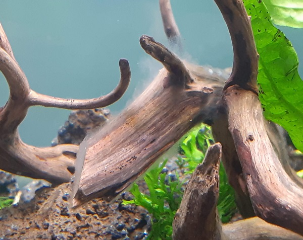 aquarium-water-mold-coping-1
